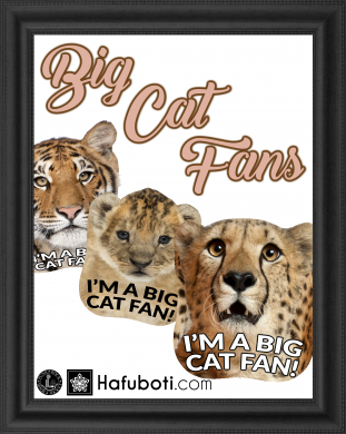 Three free fan templates for big cat-lovers to download and use.